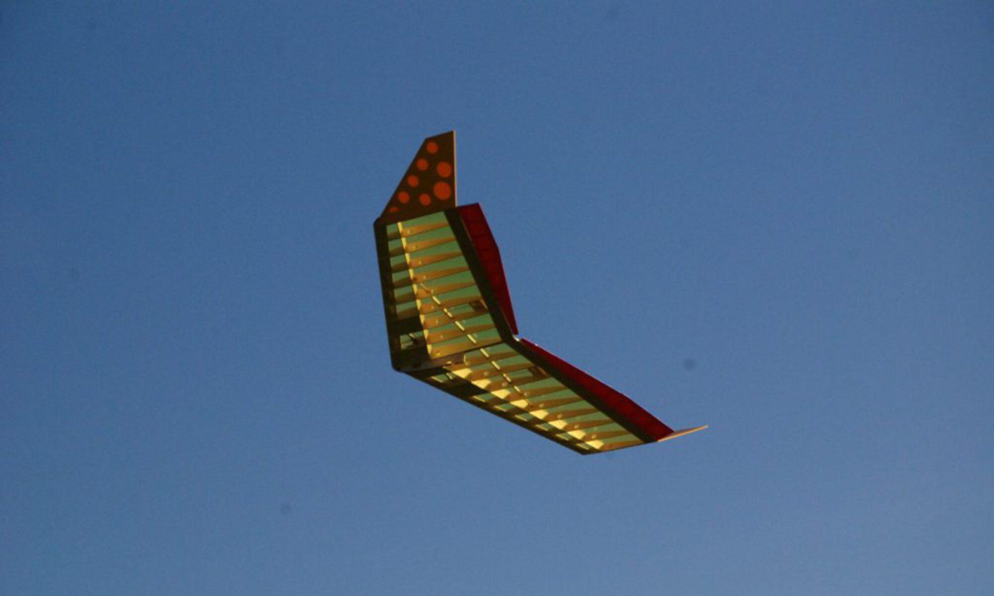 Dizzybird